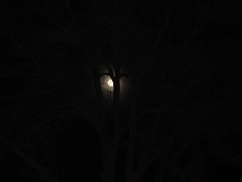 Depois que eu vi esta foto, nem quis editar... De todas que tirei desta lua linda, esta foi a primeira e a melhor...