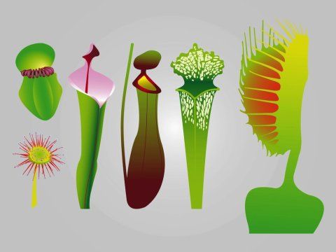 freevector-carnivorous-plants